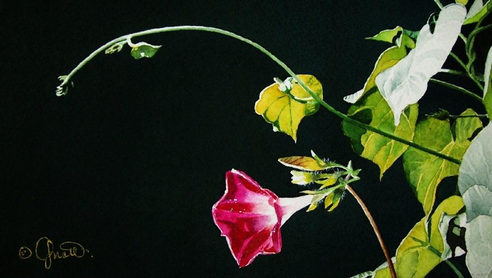 """""""Morning Glory & DVD Sale Continues..."""" original fine art by Jacqueline Gnott, TWSA, WHS"""