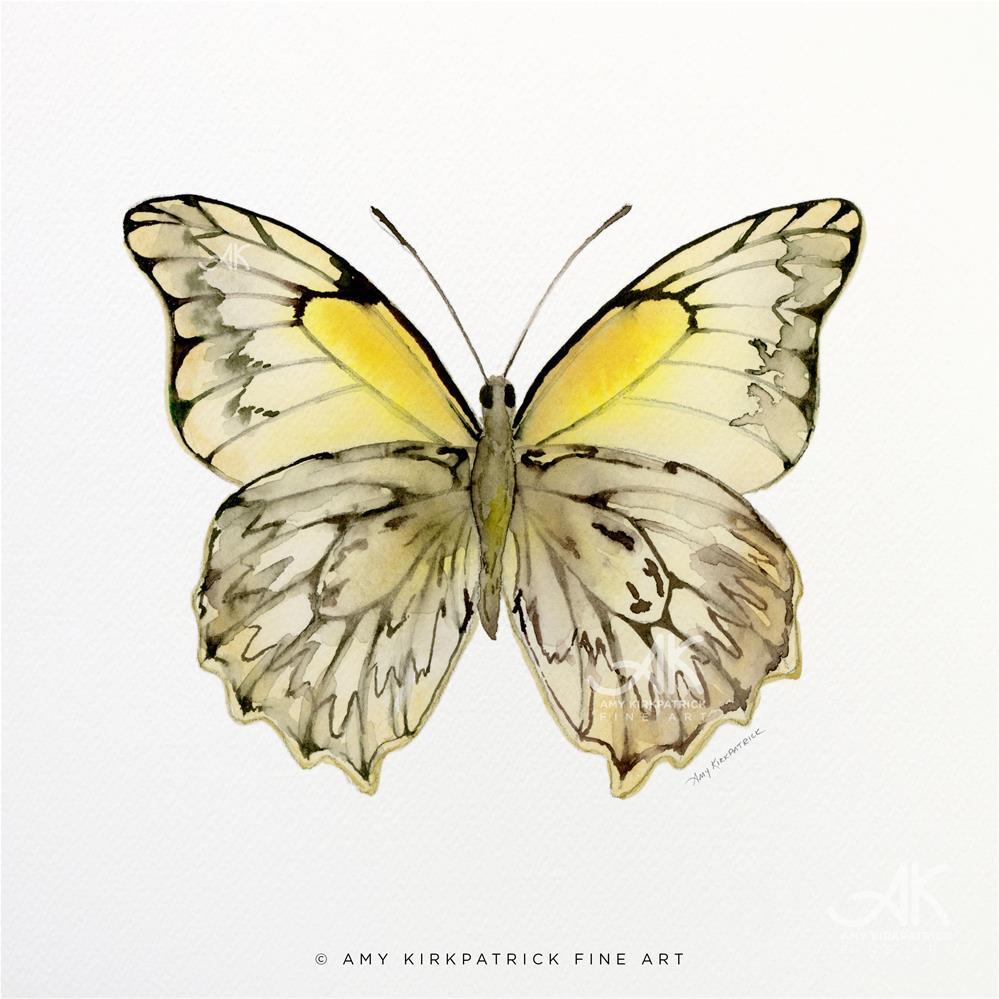 """""""#44 Hesperocharia Graphite Butterfly #0353"""" original fine art by Amy Kirkpatrick"""