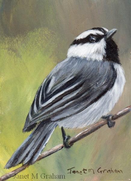 """Mountain Chickadee ACEO"" original fine art by Janet Graham"