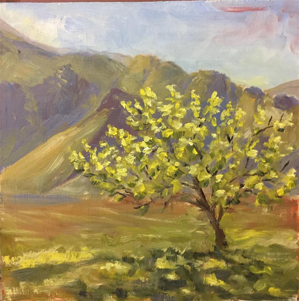 """A backlit pear tree"" original fine art by Natasha Ramras"