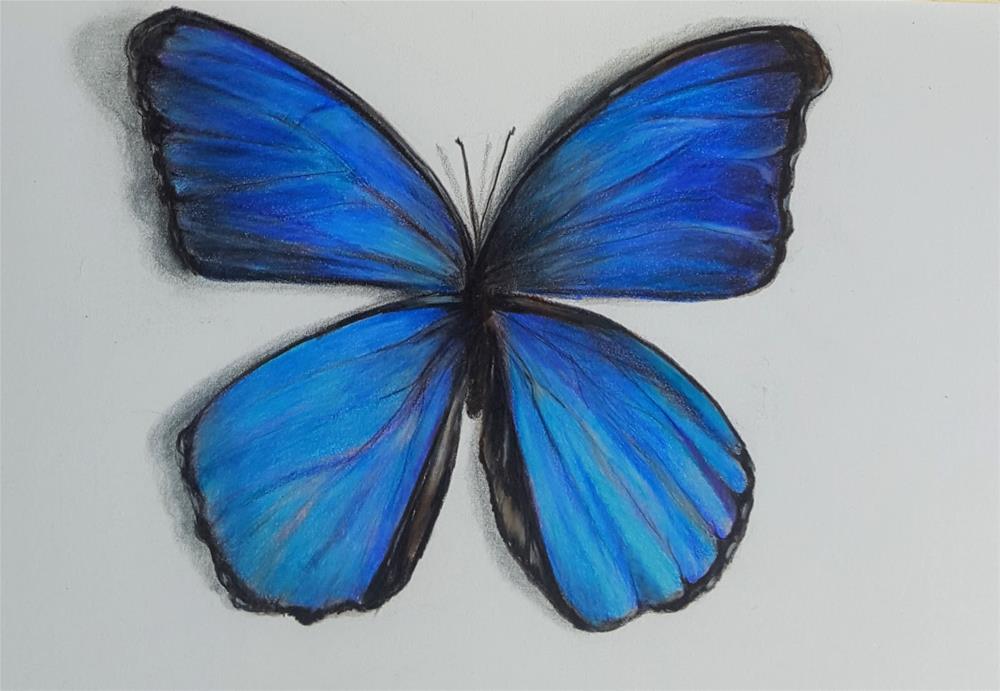 """Blue Morpho"" original fine art by Anna Lisa Leal"