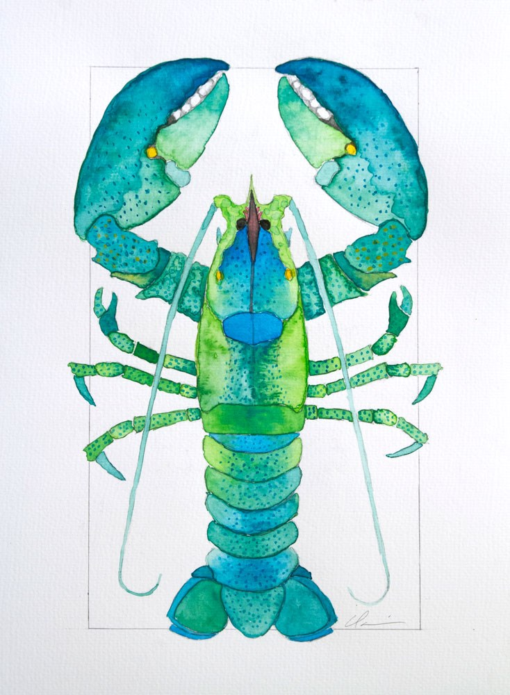 """Green Lobster"" original fine art by Clair Hartmann"