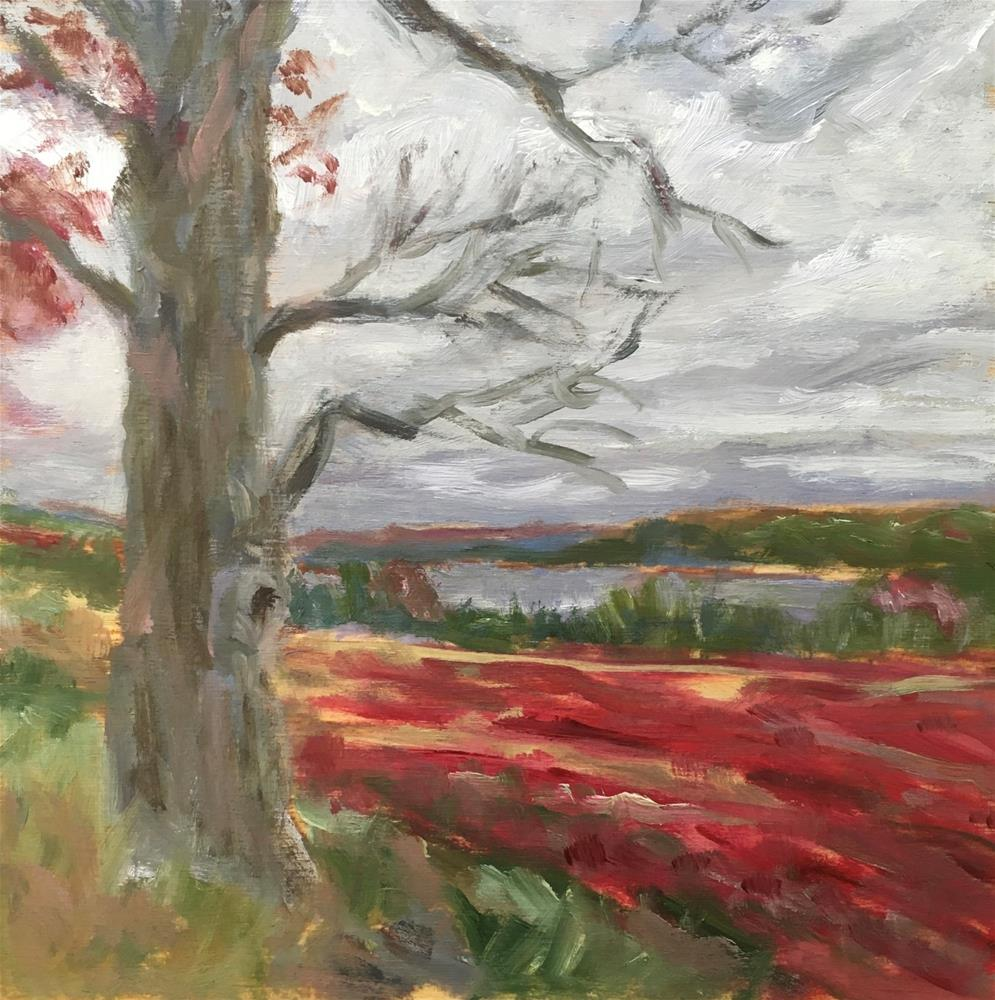 """Fall Blueberry Barrens"" original fine art by Shari Goddard Shambaugh"