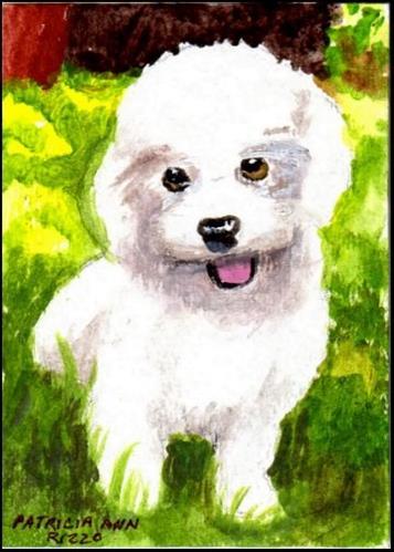 """""""Small White Puppy"""" original fine art by Patricia Ann Rizzo"""