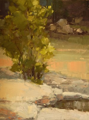 """Sycamore at the Springs"" original fine art by Laurel Daniel"