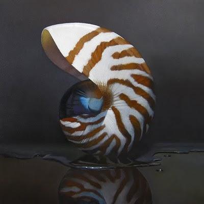 """Nautilus 8x8"" original fine art by M Collier"