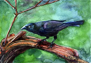 """""""Watercolor: Grackel"""" original fine art by Belinda Del Pesco"""