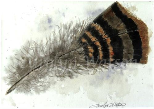 """Turkey Feather"" original fine art by carolyn watson"