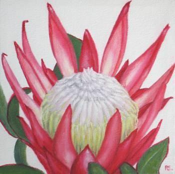 """""""Protea Madiba"""" original fine art by Pera Schillings"""