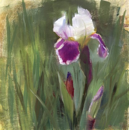"""""""The Iris are blooming"""" original fine art by Kathy Weber"""