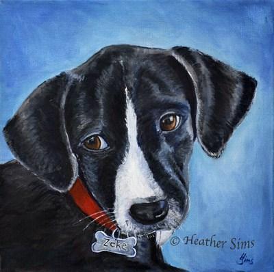 """Zeke"" original fine art by Heather Sims"