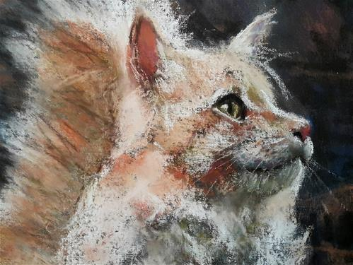 """Cat"" original fine art by Rentia Coetzee"