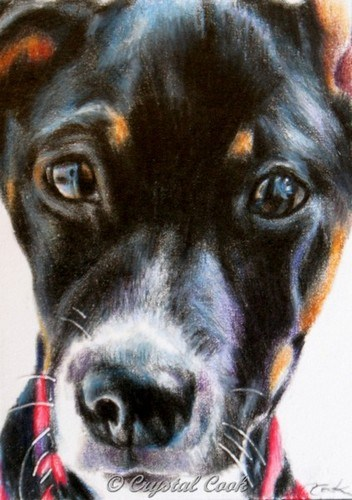 """""""Lucy"""" original fine art by Crystal Cook"""