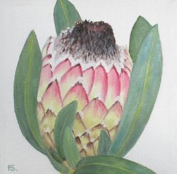 """""""Protea III"""" original fine art by Pera Schillings"""