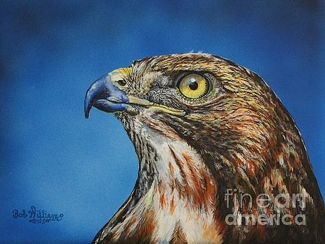 """Red-Tailed Hawk.........Honor"" original fine art by Bob Williams"