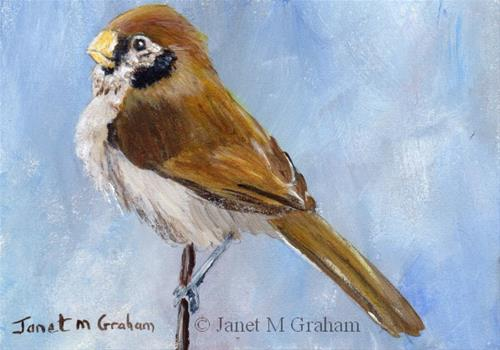 """""""Spot Breasted Parrotbill ACEO"""" original fine art by Janet Graham"""