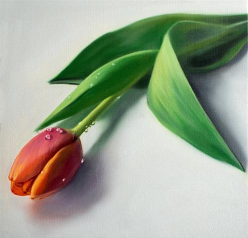 """""""Dew Drop Tulip"""" original fine art by Lauren Pretorius"""
