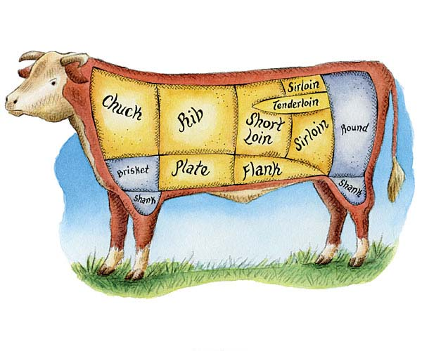 Cuts of Meat: The Anatomy of a Steer - Article - FineCooking