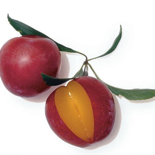 4f4ef789d75a4 How to Pick a Ripe, Juicy Plum - Article - FineCooking