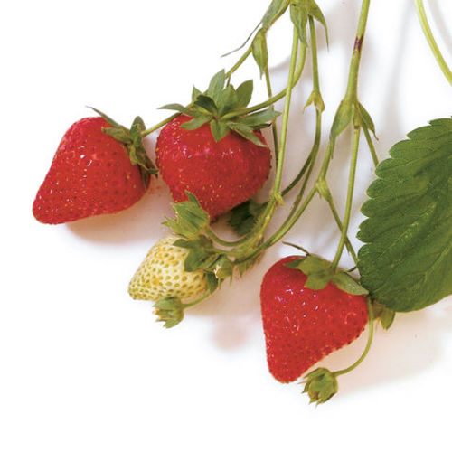 Homegrown Homemade How To Plant Strawberries Finecooking