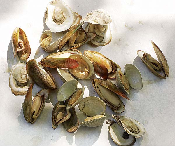 Grilled Mussels, Clams, and Oysters