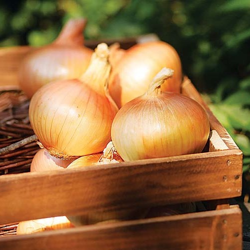 Balsamic Glazed Grilled Sweet Onions Recipe Finecooking