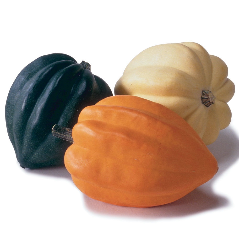 Acorn Squash Ingredient Finecooking
