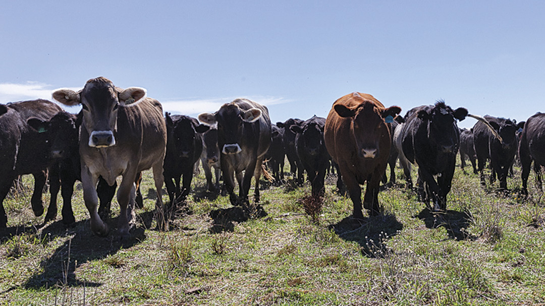 All About Buying and Cooking with Grass-Fed Beef
