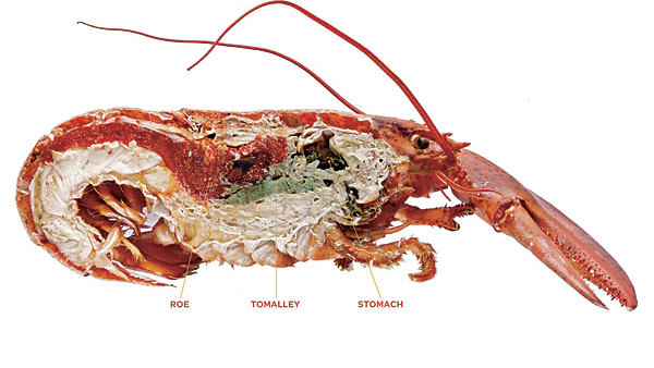 Get More From Your Lobster - Article - FineCooking