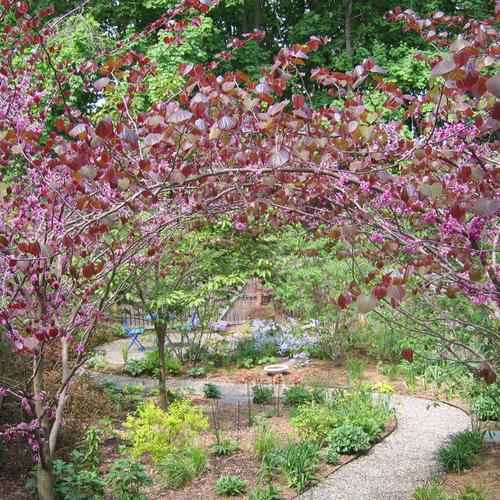 Nancy\'s in-town prairie garden in New York - FineGardening