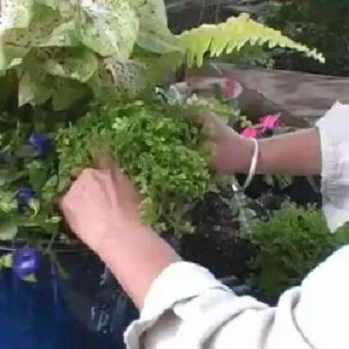picking plant