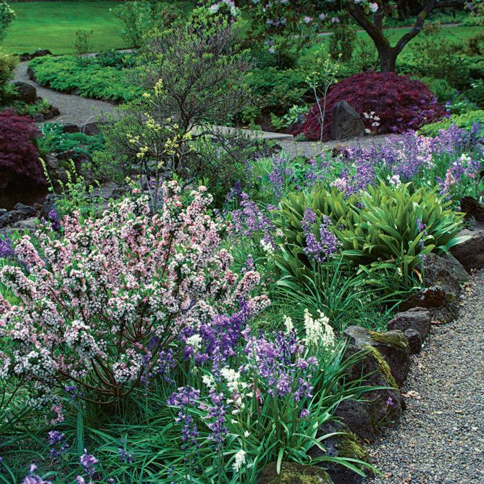10 Flowering Evergreen Shrubs Finegardening
