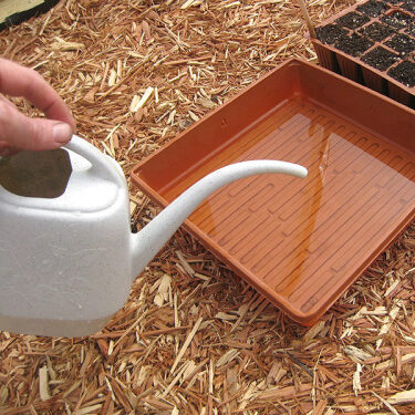putting the water in the plants container