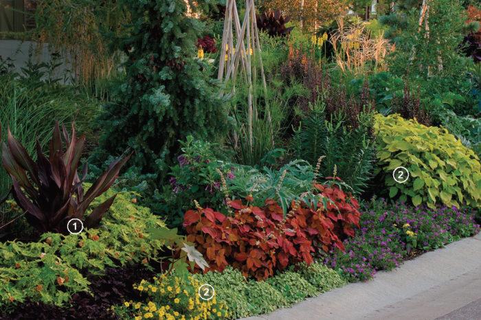 contrasting plants