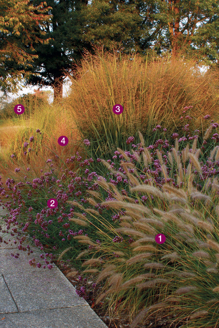 Great Combinations With Ornamental Grasses Finegardening