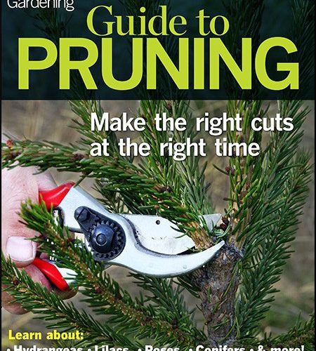Guide to Pruning
