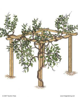 Pruning and Training Wisteria