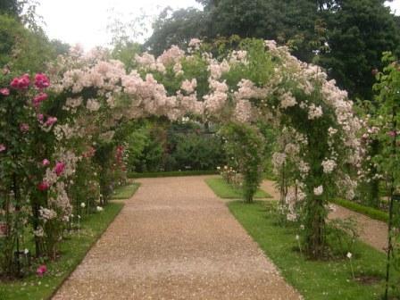 Video: Pruning Climbing Roses