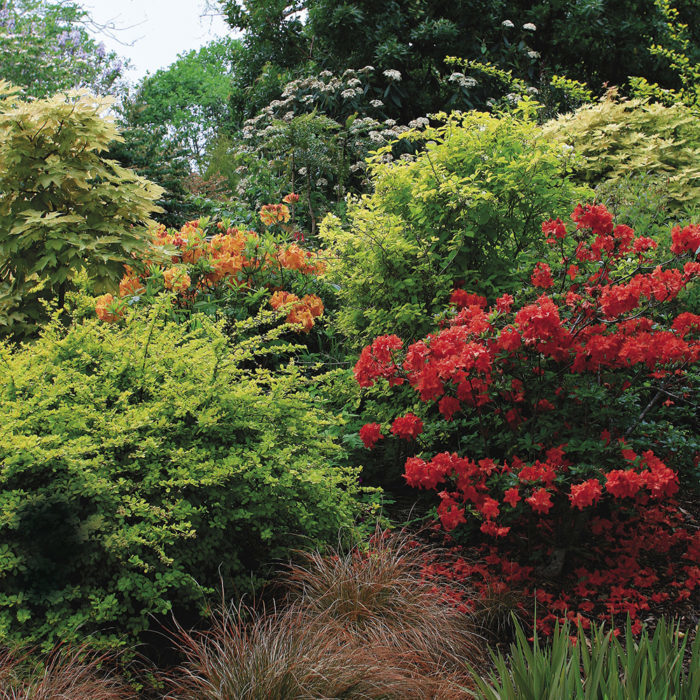 Design A Garden With Shrubs Finegardening