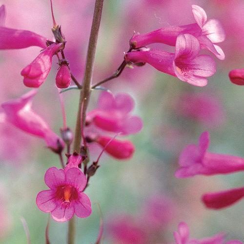 Regional Picks: Uncommon & Unfussy Plants - Southwest
