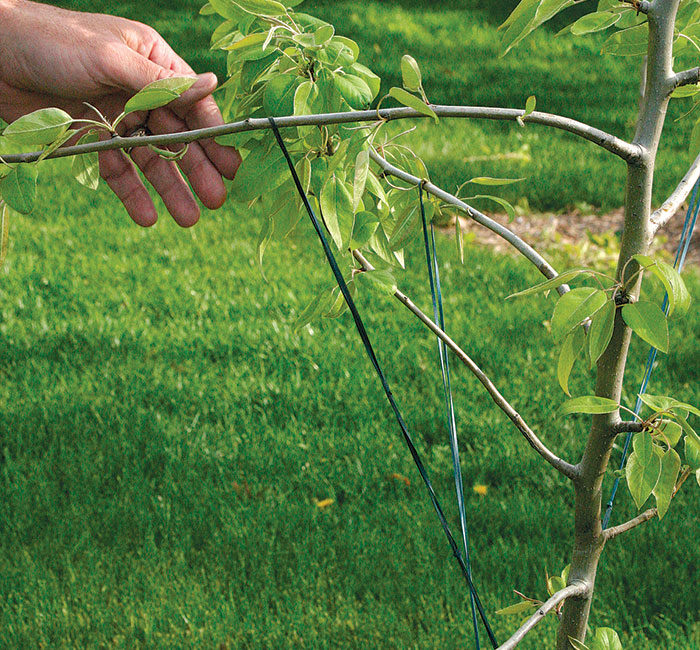 Connecting the ladder to branches