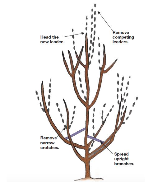 establishing a new ladder illustration