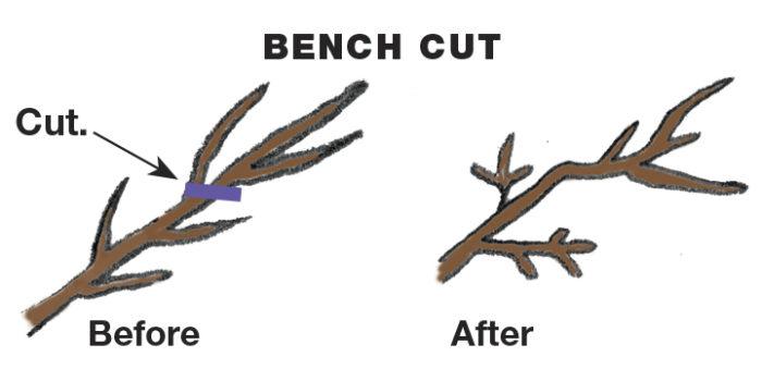 Bench Cut illustration