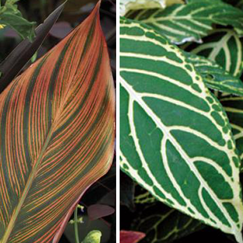 Give Your Border a Tropical Punch