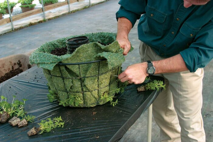 Using a sharp object, make small incisions in the liner just below the current soil level and carefully poke the root-balls of the plants through from the outside.