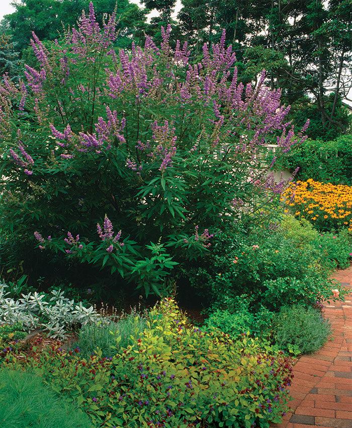 10 Shrubs For Summer Color Finegardening