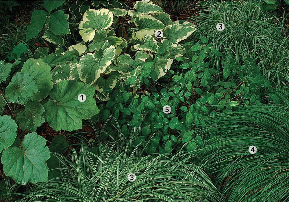 10 Combinations For Shade Finegardening