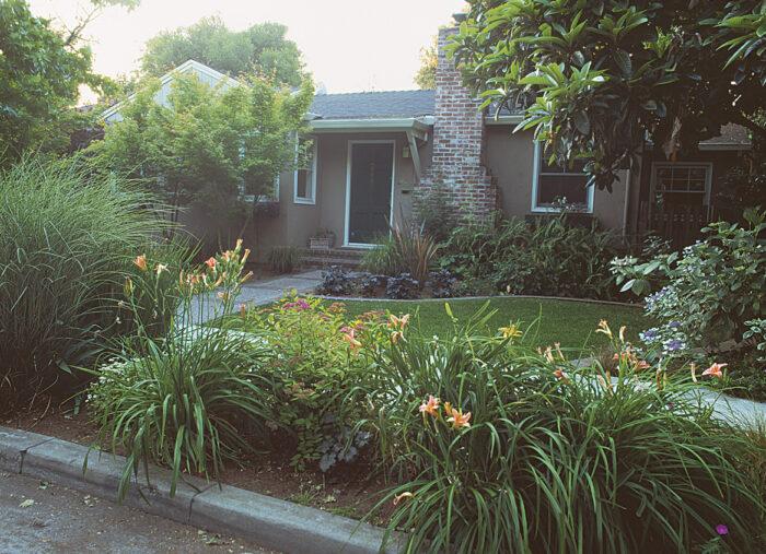 ornamental grasses in yard