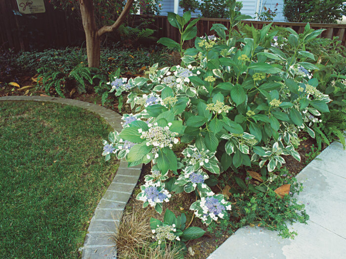 edged beds in front-yard walk