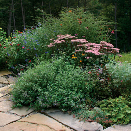 spaced plants will grow to be full without needing staking